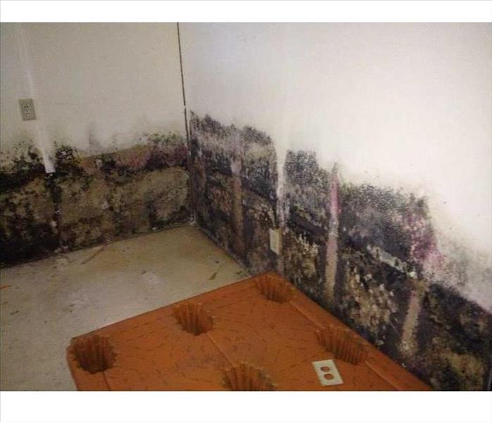 Mold Growth in a  Downtown Fort Worth Commercial Building