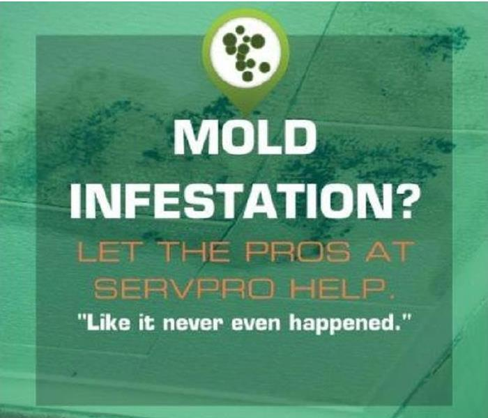 Mold Remediation Exactly What Is Black Mold and What should I Do If I Suspect Mold