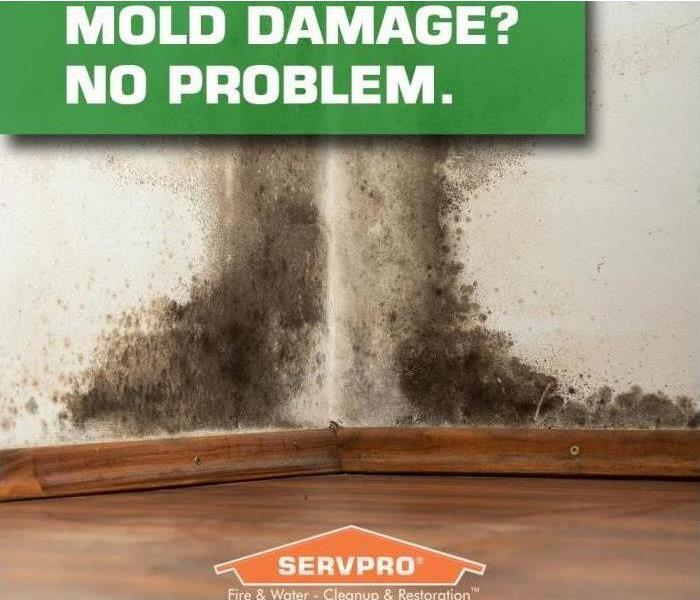 Mold Remediation What To Do If You Suspect Mold Growth In Your Commercial Building