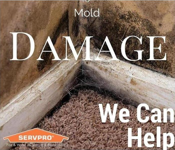 Mold Remediation What to Expect During Mold Remediation